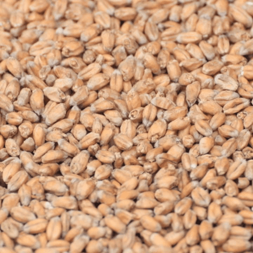 GRAINS - Wheat Malt - 1lb