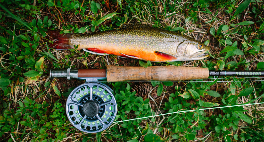Backcountry Trout
