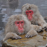 Snow Monkey Hat