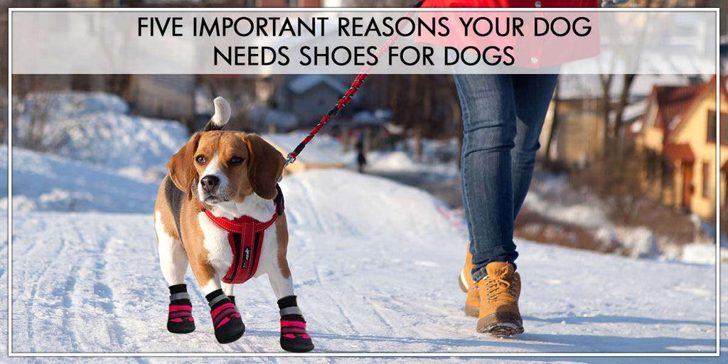 Important reasons your dog needs shoes for dogs