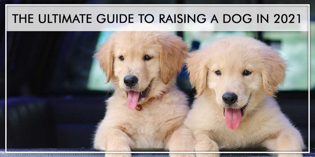 The Ultimate Guide to Raising a Dog in 2021 - Everything you need to know about how to raise a puppy