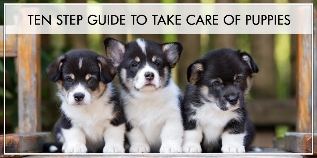 Step Guide to take care of a Puppy