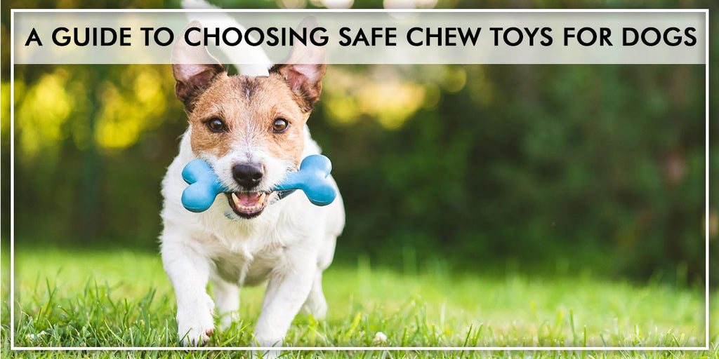 A guide to choosing safe chew toys for dogs