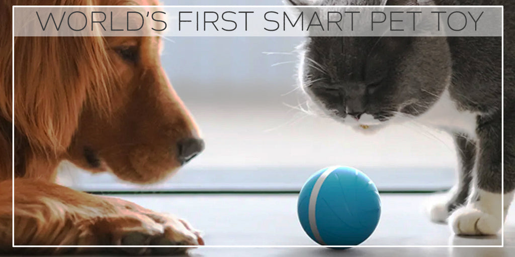 WORLDS FIRST SMART TOYS FOR PETS, NOW IN INDIA