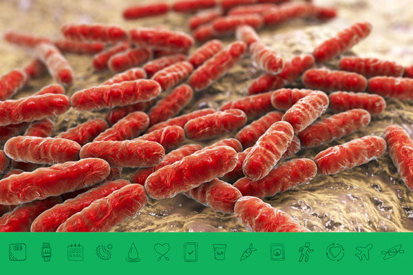 The 2 Most Common Types of Probiotics:  Bifidobacteria & Lactobacilli