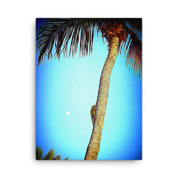 18 x 24 Iguana Climbing Palm Tree Canvas