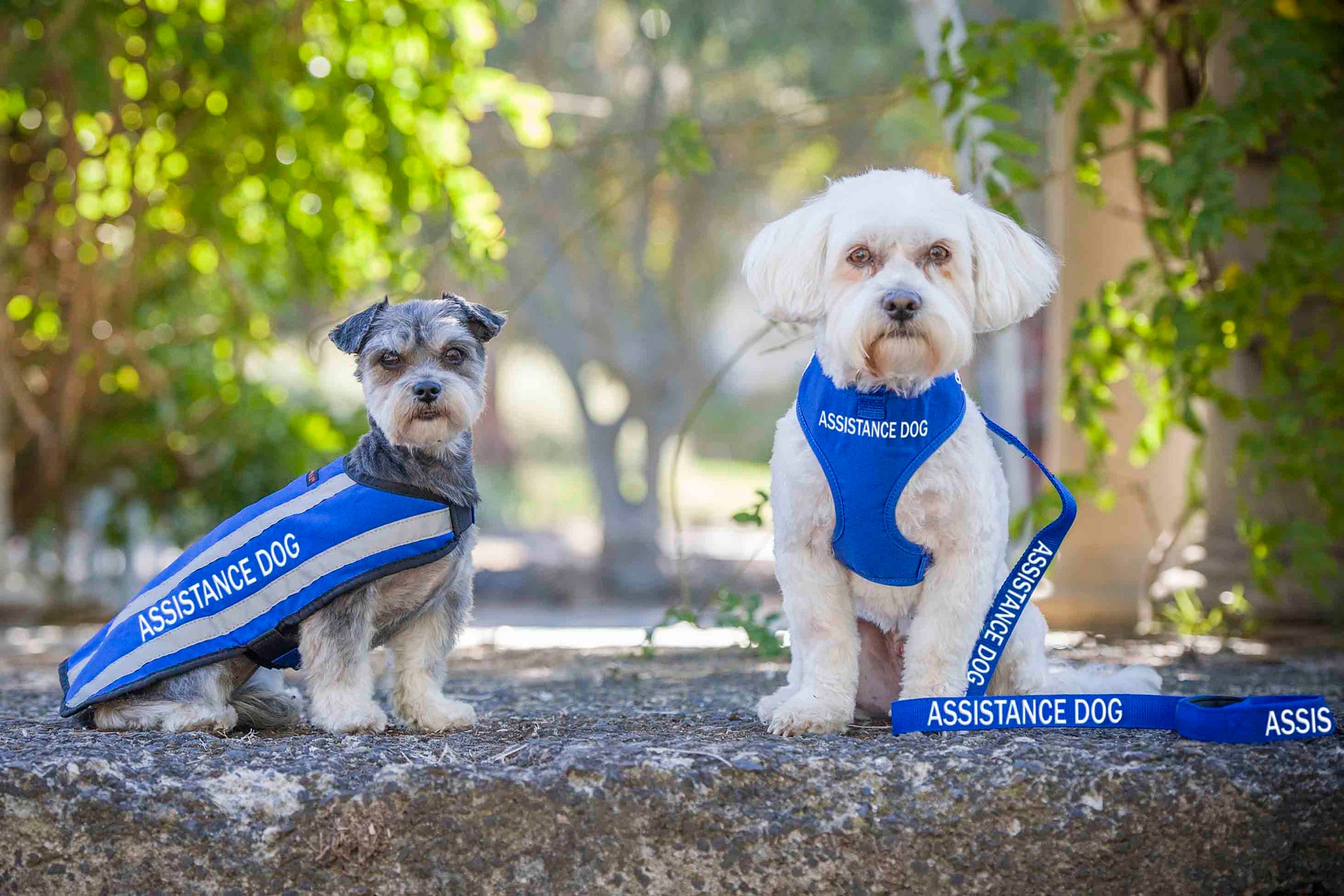 What is the Difference Between Therapy, Assistance and Service Dogs