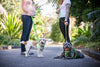 How to Keep Your Friendly Dog Friendly: The Importance of Continuous Socialization