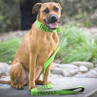 Friendly Dog Collars Green FRIENDLY Standard 120cm 4ft Lead