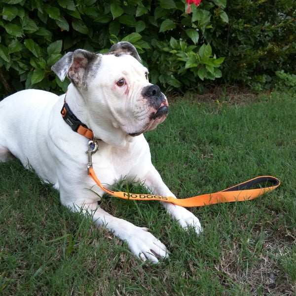 Dexil - Friendly Dog Collars NO DOGS Lead/Leash