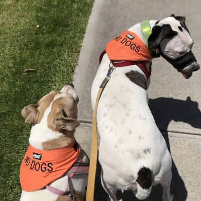 Friendly Dog Collars orange NO DOGS Dog Bandana