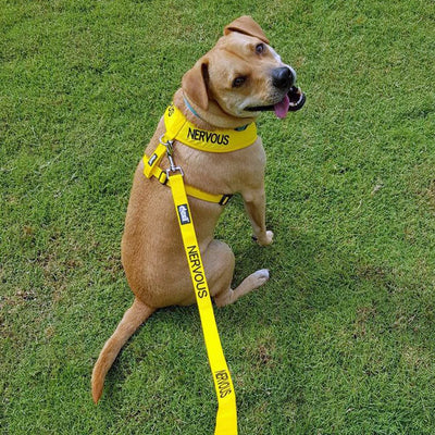 Friendly Dog Collars yellow NERVOUS Standard 120cm 4ft lead leash Yellow Dog Project Give Me Space