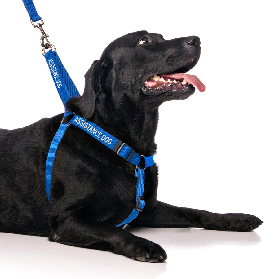 Friendly Dog Collars ASSISTANCE DOG adjustable Dog Harness