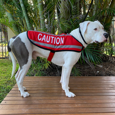 Dexil Friendly Dog Collars CAUTION Dog Coat/Jacket