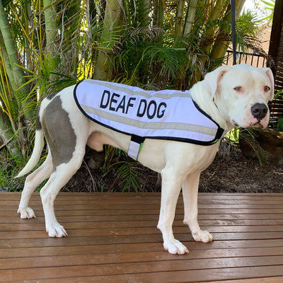 Dexil Friendly Dog Collars Deaf Dog Coat/Jacket