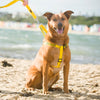 Friendly Dog Collars yellow NERVOUS Dog Adjustable Strap Harness Yellow Dog Project Give Me Space