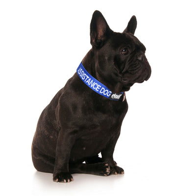 Friendly Dog Collars ASSISTANCE DOG Clip Collar