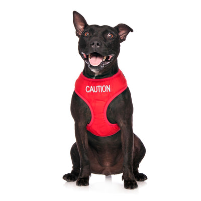 Friendly Dog Collars CAUTION Medium Vest Harness
