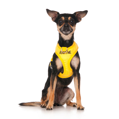 Friendly Dog Collars ADOPT ME XS Vest Harness