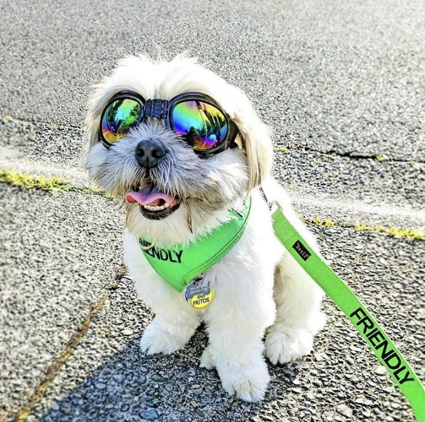 Friendly Dog Collars Green FRIENDLY XS Vest Harness