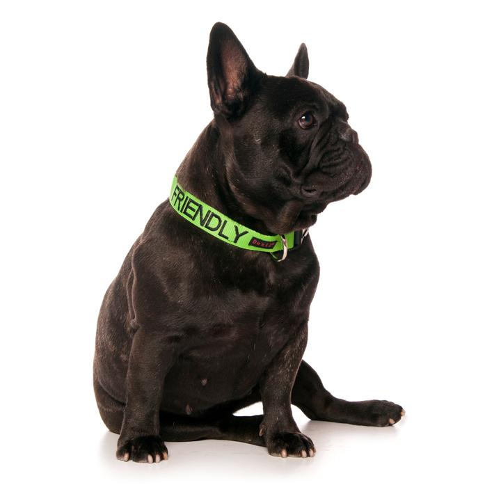 Friendly Dog Collars Green FRIENDLY Clip Collar
