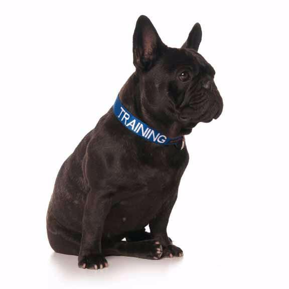 S/M Clip Collar - TRAINING - S/M Clip Collar