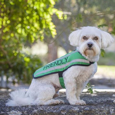 Friendly Dog Collars Green FRIENDLY Small Reflective Coat