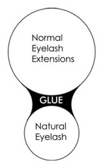 shape of natural lash with normal lash extension
