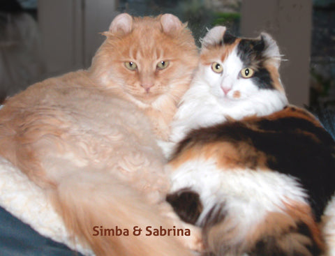 Simba and Sabrina, Best Friends