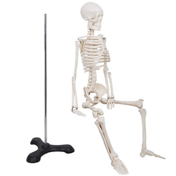 "ZENY™ Mini Size 33.5"" Advanced Medical Human Anatomical Skeleton Model + Stand + Bone Number Kit"
