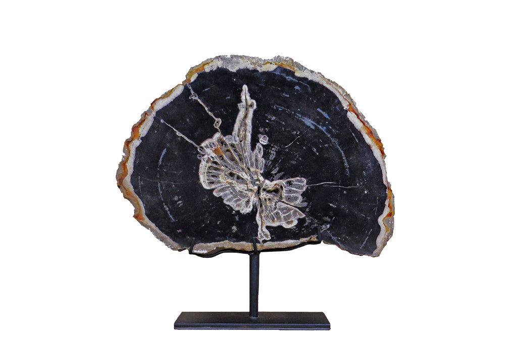 Organic Petrified Wood Display Plate - Dyag East