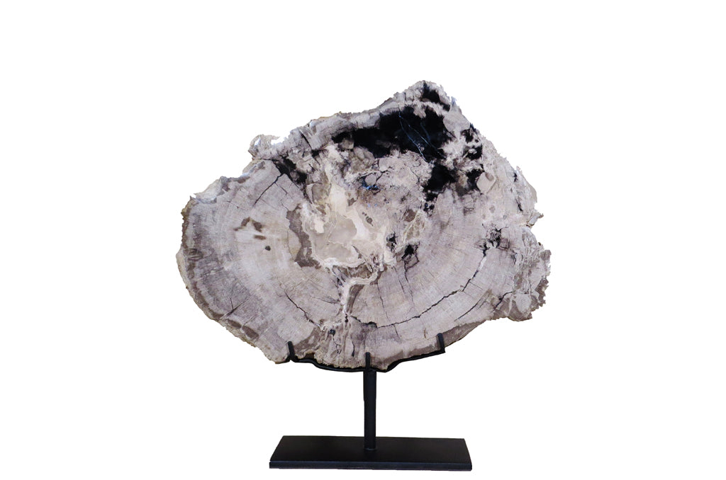 Z-Organic Gray and Black  Petrified Wood Display Plate - Dyag East