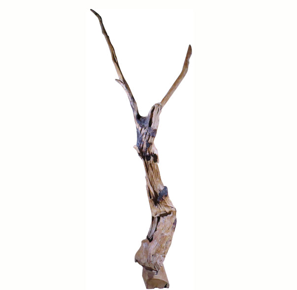 Organic Teak Root Sculpture 4 - Dyag East