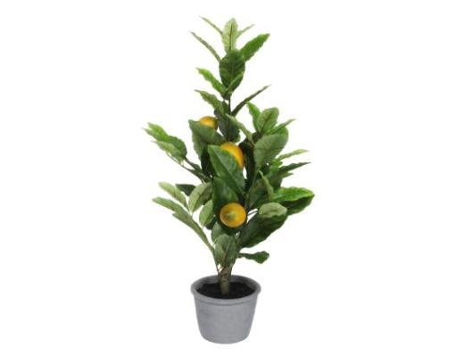 Potted Lemon Tree - Small