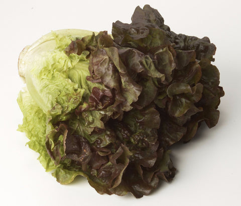 Lettuce Red Leaf - Each