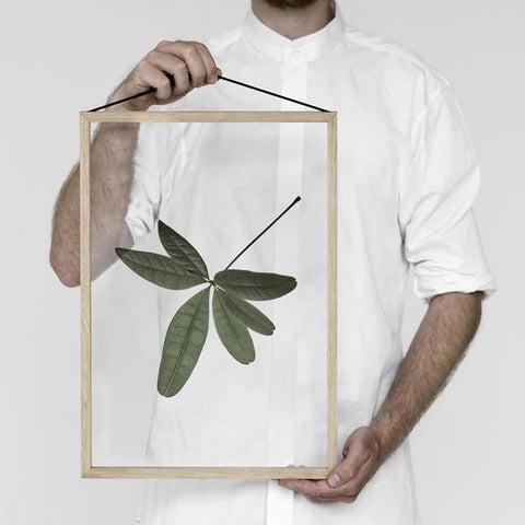 Floating Leaves Transparent Print 06
