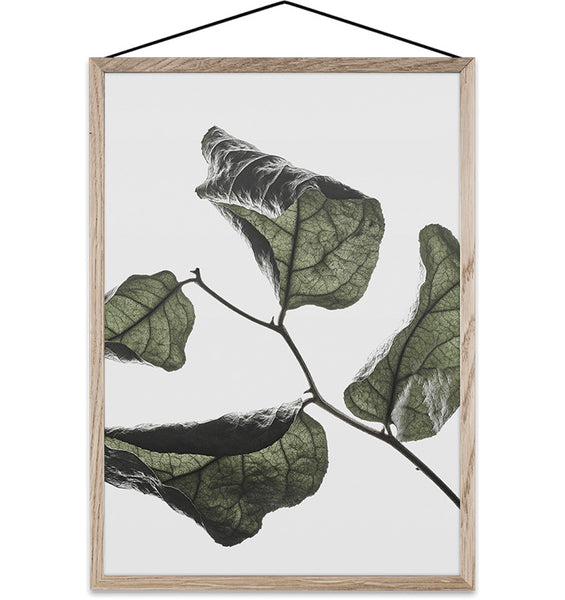 Floating Leaves Transparent Print 03