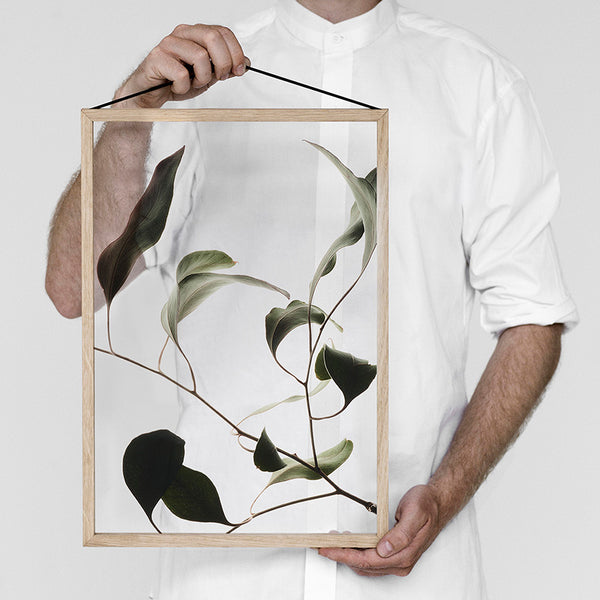 Floating Leaves Transparent Print