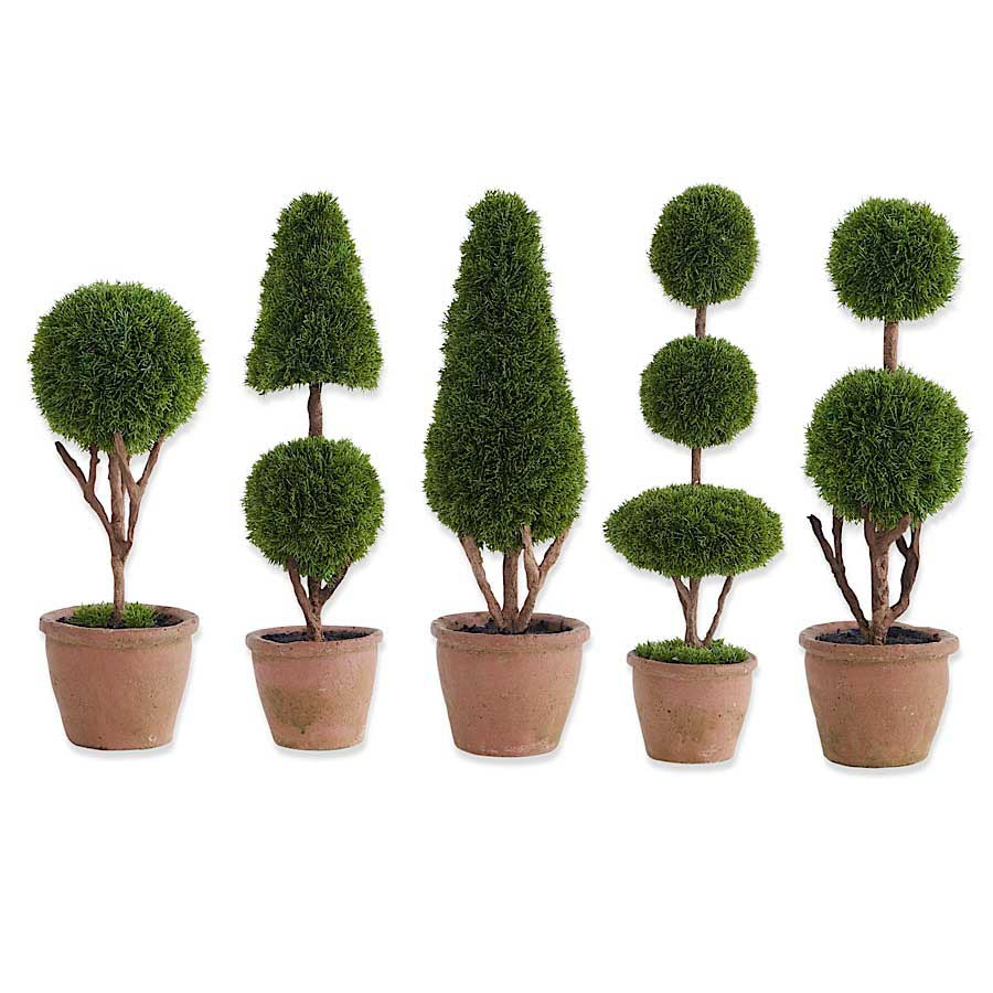 Cypress Topiary Tree In Pot