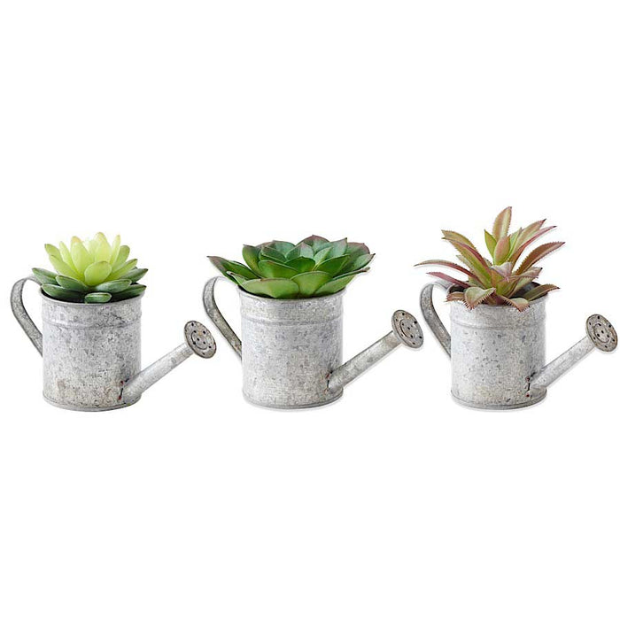 Watering Can Succulent - little happy