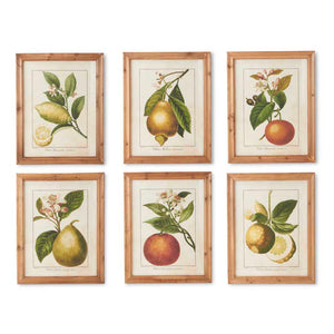 Botanical Citrus Print with Wood Frame