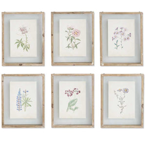 Botanical Print in Shadow Box Wood Frame