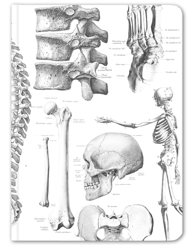 Skeleton Anatomy Hardcover Notebook