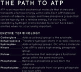 Path to ATP poster (Matte)