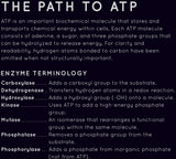 Path to ATP Poster (Glossy)