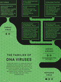 Virus Classification Flowchart Poster