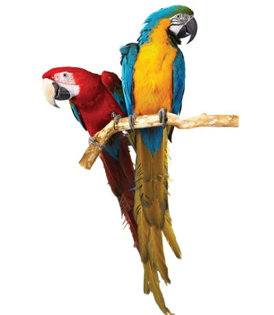 large macaw parrot bird cage bird cage