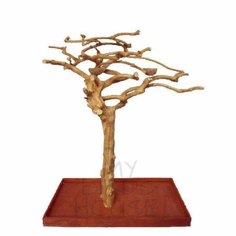 A&E Cage Co. Java Wood Tree Floor Play Stand with Large Base