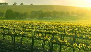 Picture of Wine Country