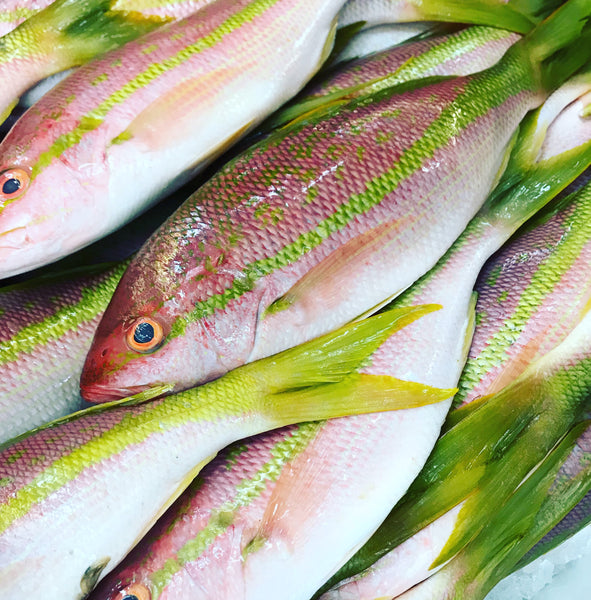 <b>FRESH WILD CAUGHT</b><br>Yellowtail Snapper